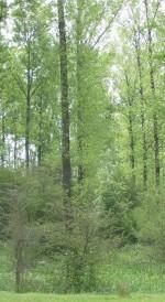 verticale_uitsnede_regulieren2004-06-06
